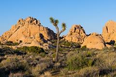 Van de zandsteenkeien en rots vormingen en een eenzame Joshua-boom royalty-vrije stock foto's