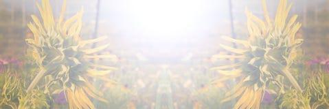 Van de de zonnebloemenzomer of daling achtergrondbanner Stock Foto's