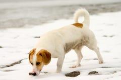 Van een hond Stock Fotografie