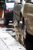 Van een hond Stock Foto