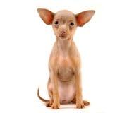 Van een hond royalty-vrije stock afbeeldingen