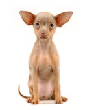 Van een hond royalty-vrije stock foto's