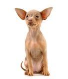 Van een hond Stock Afbeeldingen