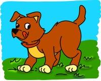 Van een hond Stock Afbeelding