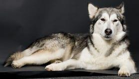 Van een hond Royalty-vrije Stock Foto