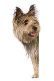 Van een hond banner Stock Foto's