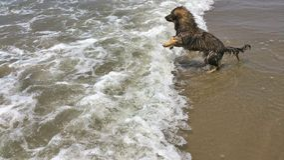 Van een hond bij strand royalty-vrije stock fotografie