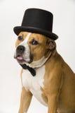 Van een hond bruidegom Stock Afbeeldingen