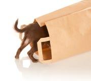 Van een hond in een document zak stock foto