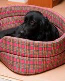 Van een hond hond Royalty-vrije Stock Fotografie