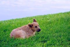 Van een hond op het gras Stock Afbeeldingen