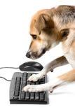 Van een hond op toetsenbord met muis Stock Fotografie