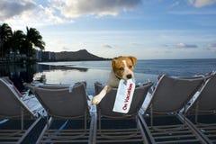 Van een hond op vakantie. Stock Afbeelding