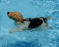 Van een hond peddel Royalty-vrije Stock Foto