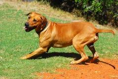 Van een hond speelkwartier Royalty-vrije Stock Afbeeldingen
