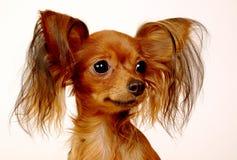 Van een hond stuk speelgoed Stock Afbeeldingen