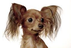 Van een hond stuk speelgoed Stock Foto's