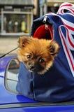 Van een hond zak Stock Foto's