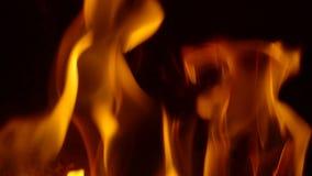 Van een lus voorziende achtergrond die oranje vlammen kenmerken die in langzame motie trillen stock footage