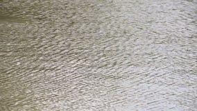 Van een lus voorziende golven op de oppervlakte van het water stock videobeelden