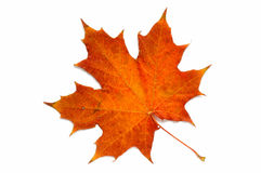 Van een reeks: de herfst blad? stock afbeeldingen