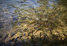 Van een viskwekerij Stock Afbeeldingen