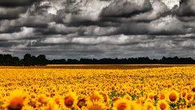 Van Gogh Summer. Photos libres de droits