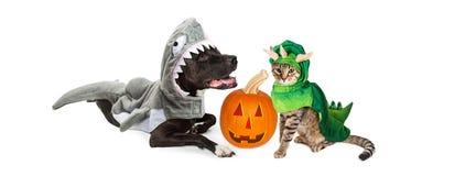 Van Halloween het Puppy en van Kitten With hefboom-o-Lantaarn Royalty-vrije Stock Fotografie
