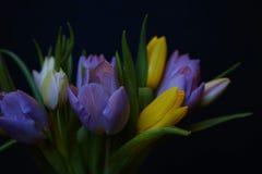 van het het achtergrond boeketclose-up van tulpenbloemen zwarte de lentemulticolors Stock Afbeeldingen