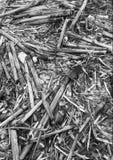 Van het achtergrond suikerrietafval patroon Royalty-vrije Stock Afbeeldingen