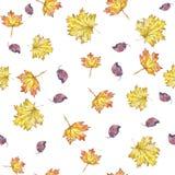 Van van het achtergrond waterverfpatroon naadloze de esdoornbladeren de herfstbladeren geel op witte achtergrond Stock Foto's