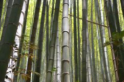 Van het bamboe bosbomen van Japan het perspectiefhemel royalty-vrije stock foto