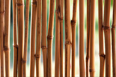 Van het bamboe (riet) de achtergrond Stock Afbeeldingen