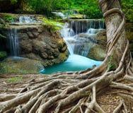 Van het Banyanboom en kalksteen watervallen in zuiverheids diep bosgebruik n stock afbeeldingen