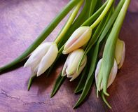 van het het boeketclose-up van de tulpenbloem van de de achtergrond lentekuiper licht Royalty-vrije Stock Foto's