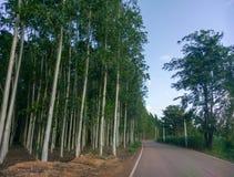 Van het de aardlandschap van Prajinburithailand de scène blauwe hemel en stedelijke weg aan het natuurlijke gevoel vers en aantre royalty-vrije stock afbeeldingen