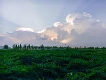 Van het de aardlandschap van Prajinburithailand de scène blauwe hemel en stedelijke weg aan het natuurlijke gevoel vers en aantre royalty-vrije stock foto's