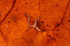Van het de achtergrond herfstblad textuur Royalty-vrije Stock Afbeeldingen