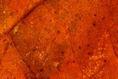 Van het de achtergrond herfstblad textuur Royalty-vrije Stock Afbeelding