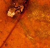 Van het de achtergrond herfstblad textuur Stock Foto