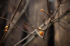 van het de bessenclose-up van de takboom vertroebelt de gele aard van de de omheiningsherfst houten in openlucht achtergrond Stock Foto