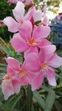Van het de bloem mooie landschap van de aardgift de roze groene bladeren stock afbeeldingen