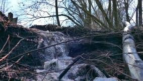 Van het de bomenlandschap van de stroom bosrivier droge de waterval geanimeerde video stock video