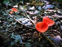 Van het de boomzonlicht van de paddestoelaard de heldere Organische organische schitterende leuke vorm stock foto's