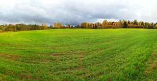 Van het de gewassen groen gebied van de de winterkorrel ver schot als achtergrond Stock Fotografie