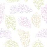 Van het de kleuren naadloze patroon van het druivenfruit grafische de schetsillustratie als achtergrond Stock Afbeeldingen
