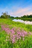 Van het de lentelandschap van het bloemenplatteland blauwe de hemelrivier Stock Afbeeldingen