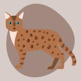 Van het de luipaard leuk huisdier van Bengalen van het kattenras van het de luipaard aanbiddelijk beeldverhaal bruin pluizig van  Stock Afbeeldingen