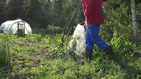 Van het de mensenwater van de dorpsbewonerkerel de boneninstallaties in tuin met gieter 4K stock video