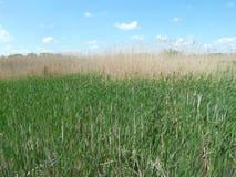 Van het de reservegebied van Tisza tà ³ de natuurlijke buigende weg Royalty-vrije Stock Foto's